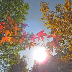 autumn leaves between sun halos and flashlight