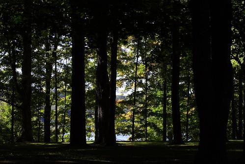 Through the Trees to the Lake