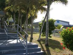 Carbullido Elementary