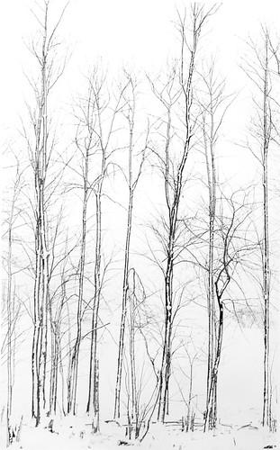 Winter Tree Etching