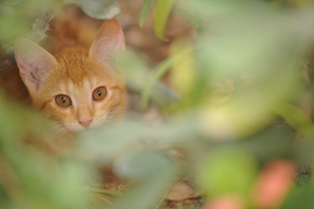 One of the anak kucing - to captured them is not that easy!