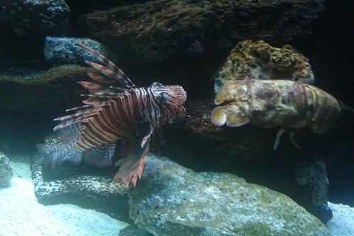 獅子魚與龍蝦
