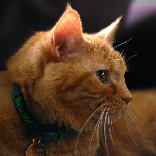 Maggie in Profile