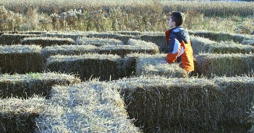 Straw Maze 1
