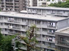 集合住宅 apartment buildings