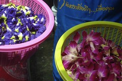 purple flower and magenta orchids
