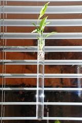 Reagenzglas_Pflanzen_01