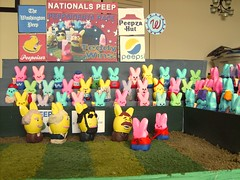 The Washington nationals racing peepsidents are represented in a Washington Post peeps diorama contest entry