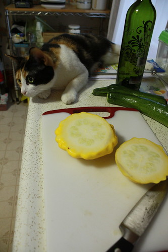 Ampersand and pattypan squash
