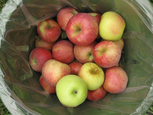 Apples - Basket