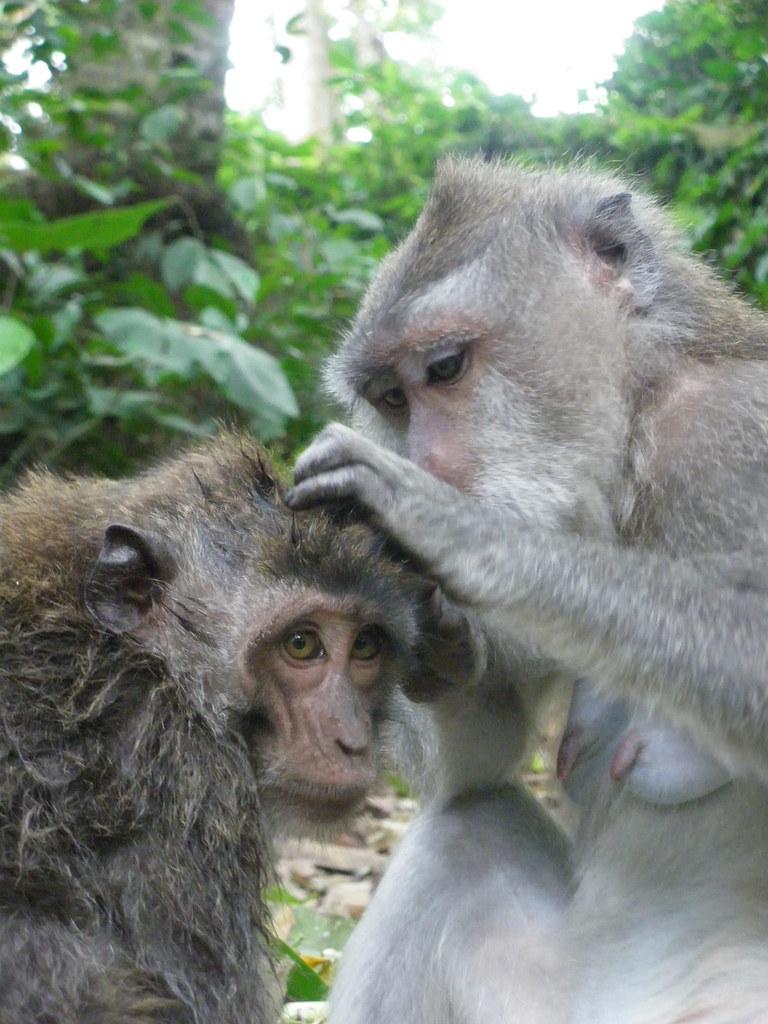 Sacred monkey forest, Bali - IMGP3116