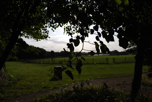 Open field at Hanwell