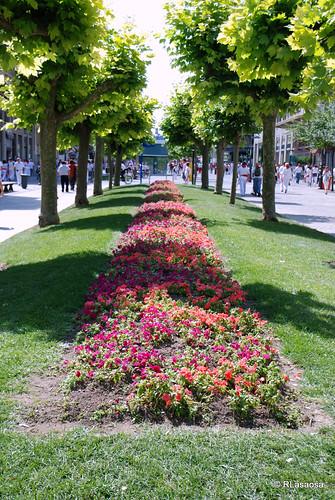 Avenida de Carlos III. Parterre floral milagrosamente indemne en plenos Sanfermines.