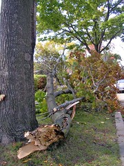 Wind Damaged Tree On E. Knapp Street