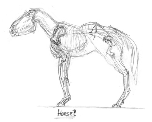 Horse skeleton, part 1
