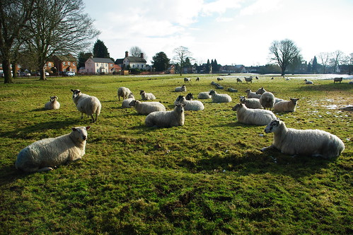 20100220-20_Sheep in meadow - Wolston Village by gary.hadden