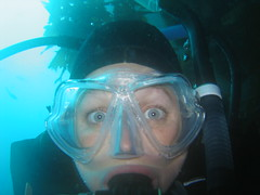 Chilly scuba diving in New Zealand