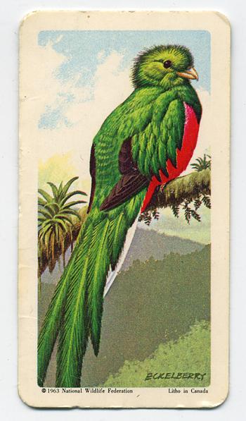 parrot card