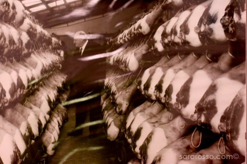 Prosciutto from 1950s - look how much fat!