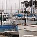 Yachts, San Francisco