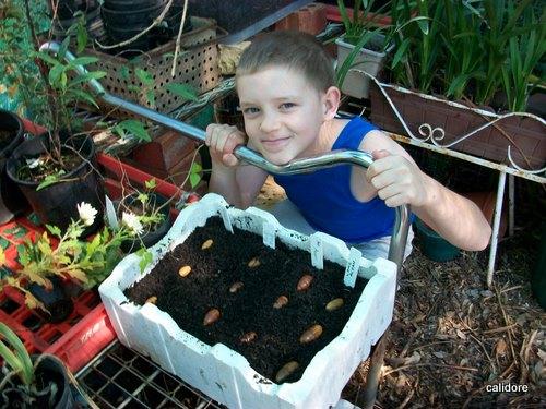 Acorns Planted