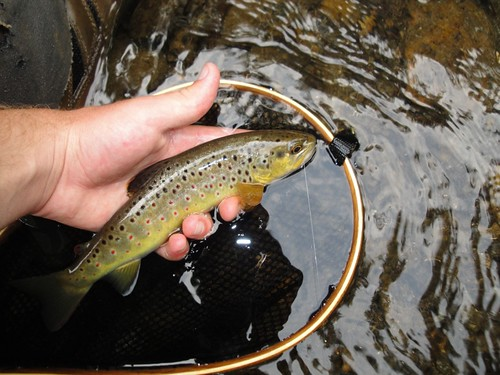 Fly Fishing Maryland