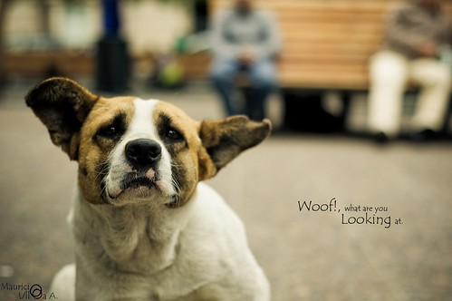 Woof!, what are you Looking at.