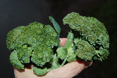 09 12 19_broccoli_0002