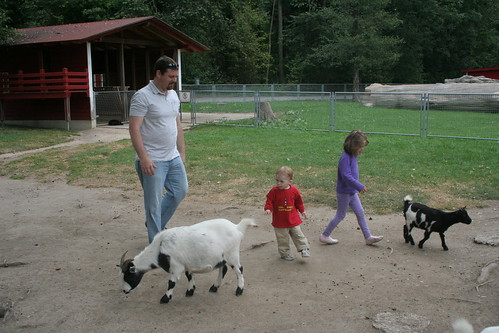 Chasing goats in the petting zoo.