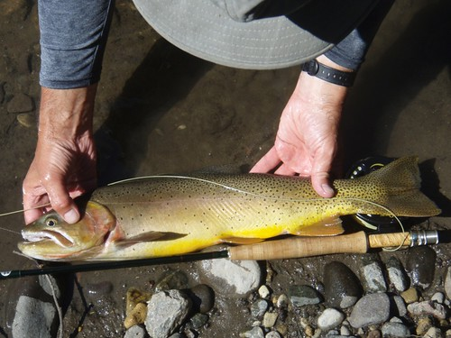 Fly Fishing Slough Creek for Cutthroat