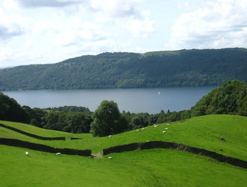 Sheep field and Lake Windermere