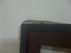 Freddie the lizard is looking at you!