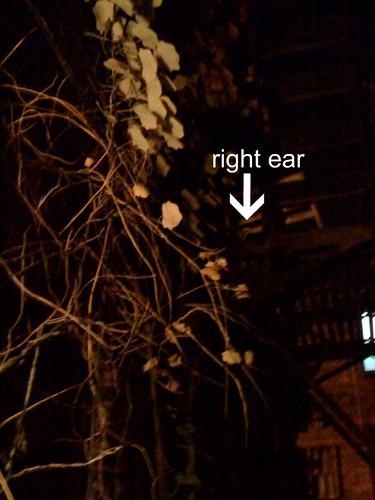 Rusty's ear