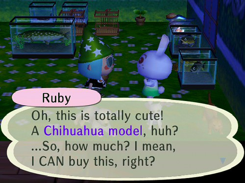 Ruby wants a Chihuahua!