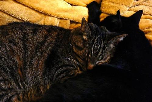 Cat Puddle