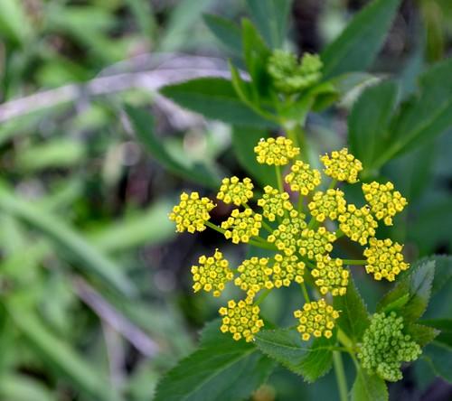 tiny yellow flowers