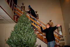 CSP & his dad pulling the twine off the tree