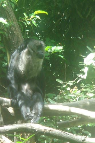 有森林之神的獮猴