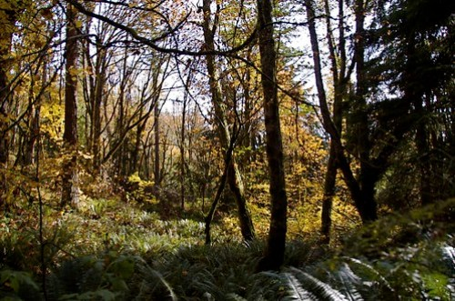 Cougar Mountain: all the beauty without the crazy alien war