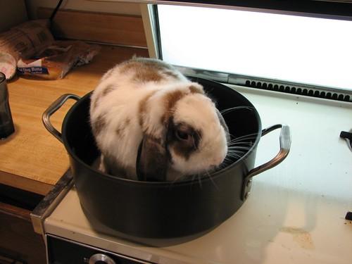 bad bunny in a pot