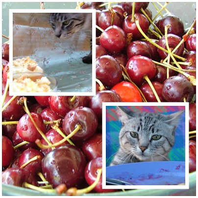 ilaria, ollie and the cherries