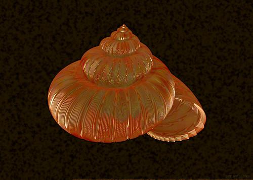 An orange shell
