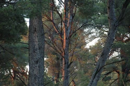 setting sun on trees
