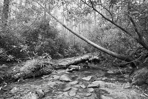 Fallen Tree 2, Julian Price Park,NC