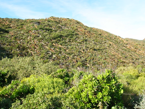Karoo suculento, cerca de Worcester