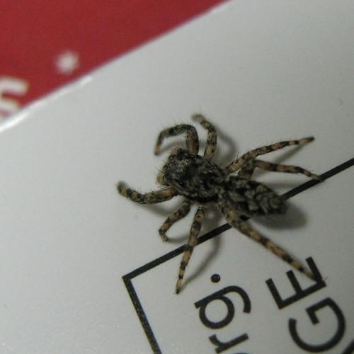 Spider (2 of 2)