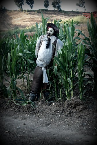 Jack Sparrow Scare Crow by you.