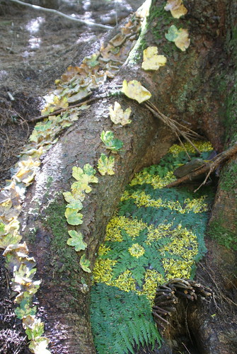 Forest Land Art de VivaoPictures