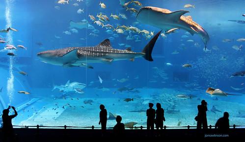 Kuroshio Sea - 2nd largest aquarium tank in the world