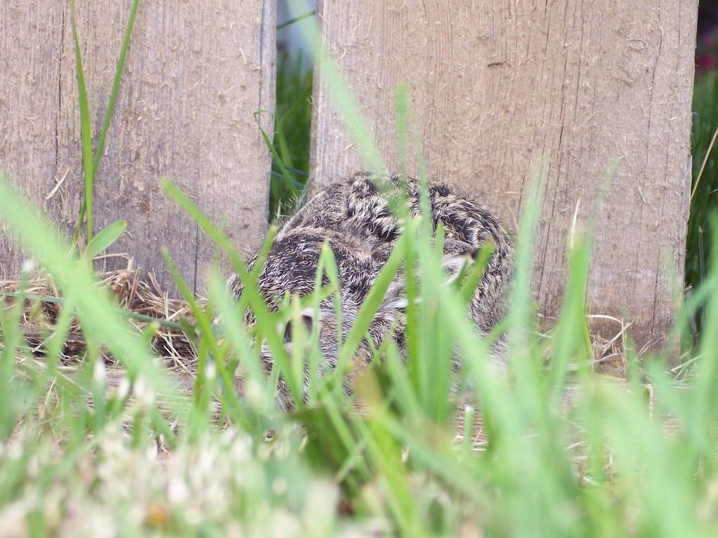 bunny July 2009